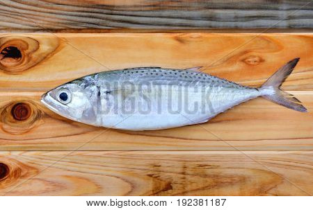 Freas Indian Mackerel For Cooking