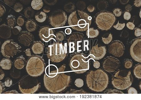 TImber Wood Trunk Stacked Lumber Pine