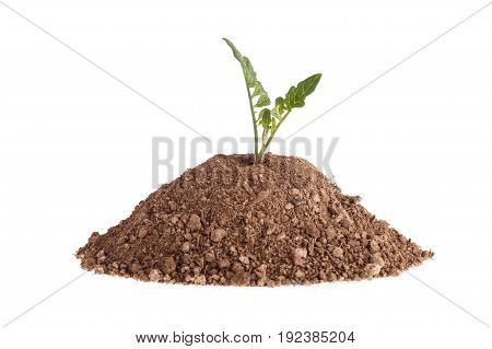 Clay With A Plant - Tomato Seedling Isolated On A White Background.
