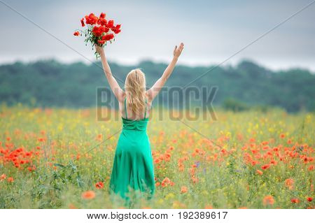 woman with bouquet of poppies and raised hands sky among the flowering meadow with red poppies. Back view