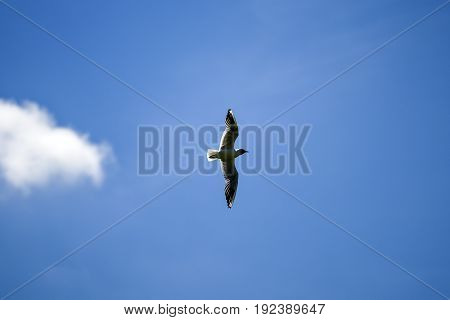 Seagull flying on a blue sky summer time