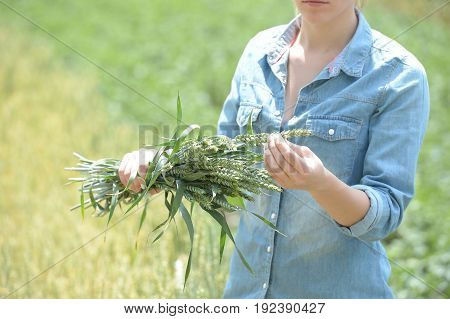 woman agronomist standing in green wheat field with ears of wheat harvest for analysis