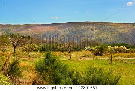 Portuguese Rustic Landscape with Green Grass Various Shrubs and Small Olive Trees on Hills and Blue Sky background in Sunny Day Outdoors