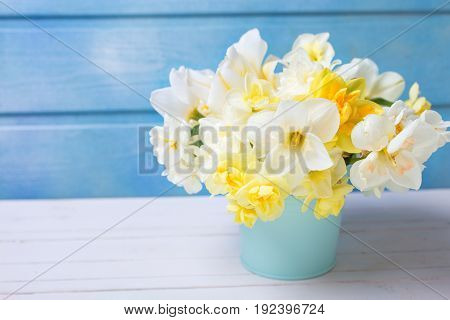 White and yellow spring narcissus or daffodils flowers against blue wooden background. Selective focus. Place for text.