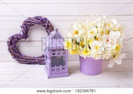 Spring narcissus or daffodils flowers in violet pot lantern and decorative heart on white wooden background. Selective focus. Place for text.