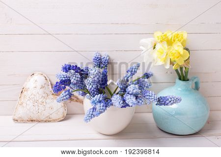Blue muscaries and yellow narcissus flowers in vases and decorative heart on white wooden background. Place for text. Selective focus.