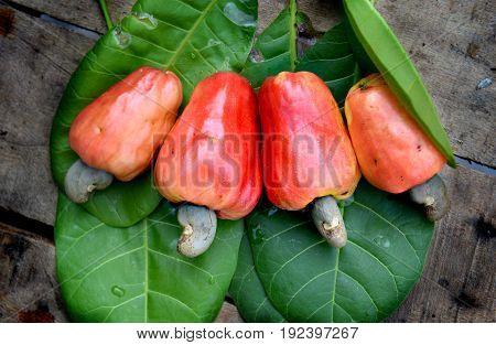 Fresh Old Cashew Nut Fruit