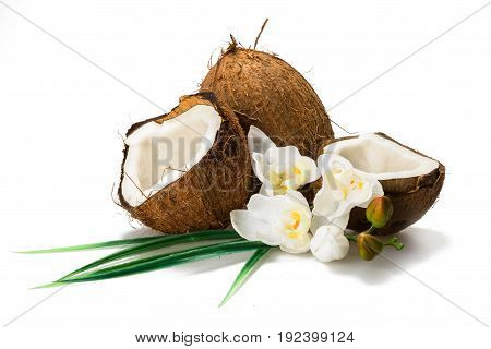 Flowers composition nut group white background element