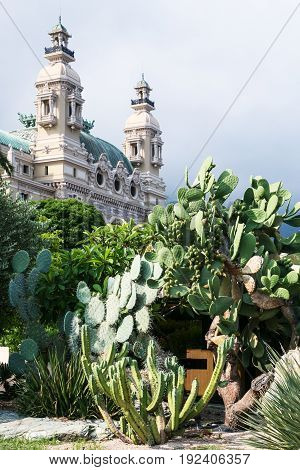 Cactuses And Casino De Monte-carlo In Monaco