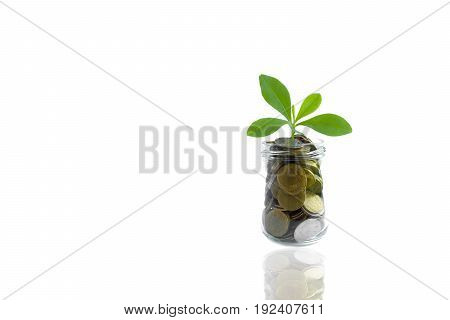 Coins and plant in bottle Business investment saving concept. Coins in bottle on white background Business investment concept