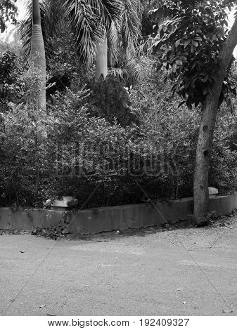 BLACK AND WHITE PHOTO OF PAVEMENT WITH PLANTS, STOCK PHOTO