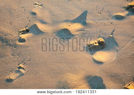Footprint In Wet Sand On Beach