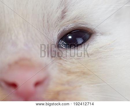 Beautiful portrait of a newborn white kitten .