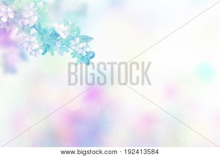 Natural background. Blossoming branch apple. Bright colorful spring flowers