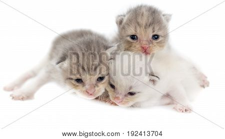 Three newborn kitten isolated on white background .