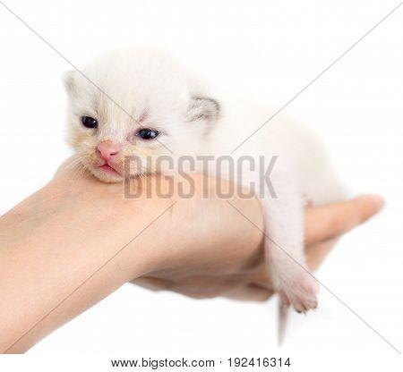 Newborn kitten in a hand on a white background .