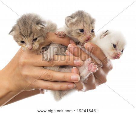 Three newborn kitten in a hand on a white background .