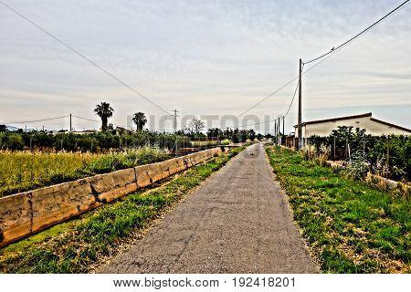 The field by the marjaleria of castellon de la plana
