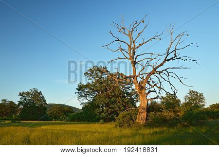 Summer forest, meadows and pastures landscape in Slovakia. Evening scenery in Gavurky. Sunlit country with dry tree