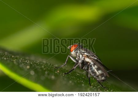 Close up of fly insect in the nature