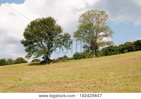 View of Green open space with mature trees on a sunny day with light clouds at Stroud Preserve