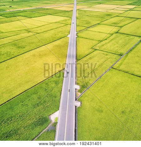 Aerial view of Mr. Brown Avenue with rice fields. Chishang. Taiwan. April 2017.