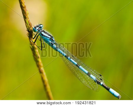 Small Blue Dragon Fly On Stem