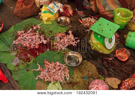 Skinned frogs with legs for sale in a Bangkok market - Chinese edible frogs, also called East Asian bullfrogs