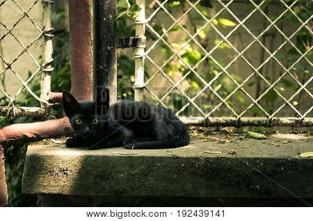 Little black frightened kitty on the concrete fence of the garden. Cat life.