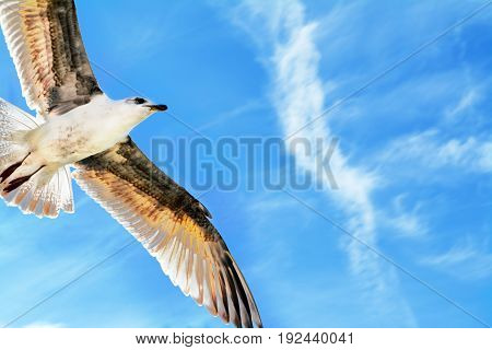 Seagull soars overhead against bright blue sky