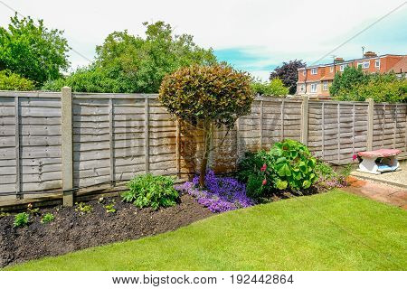 Flower bed with camelia tree and flowers and a wooden fence behind.