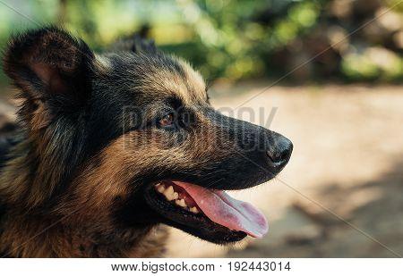 Portrait of a yard dog. A great plan.