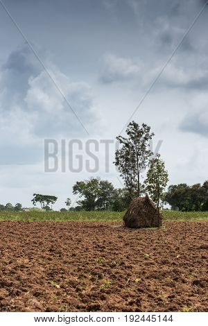 Karnataka India - October 26 2013: Portrait of Haystack on brown dirt field with cotton field and trees in background under cloudscape.