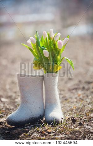Nature composition with tulip flowers in felt boots at spring park