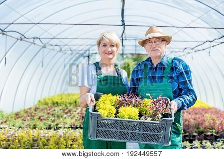 Gardeners standing in a greenhouse, holding a selection of plants. Professional and cheerful gardening experts. Gardening and work concept.