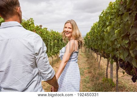 Senior couple holding hands and walking through vineyard. Cheerful mature couple enjoying afternoon in a vineyard. Rear view of happy woman holding hands of her husband and looking at camera.
