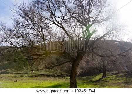Tree with bare branches on the nature .