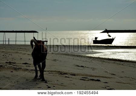 Silhouette of dog and boat at sea,Hat Chao Samran,Phetchaburi province,thailand
