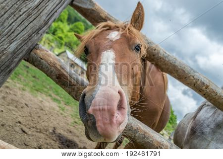 Horse peaking his head on ranch wooden fence