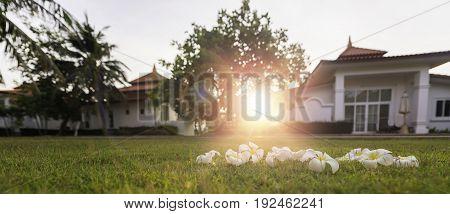 Plumeria Tropical Spa Flower In Garden Village