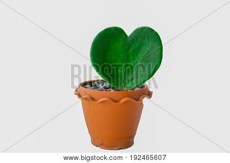 Cactus in plastic pot isolated on white background