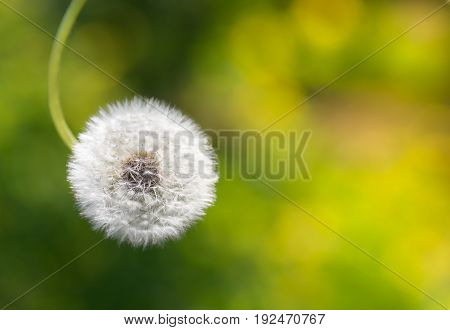 Fluffy dandelion on a beautiful background. Soft focus