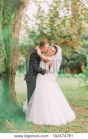 The full-length portrait of the hugging newlyweds under the tree