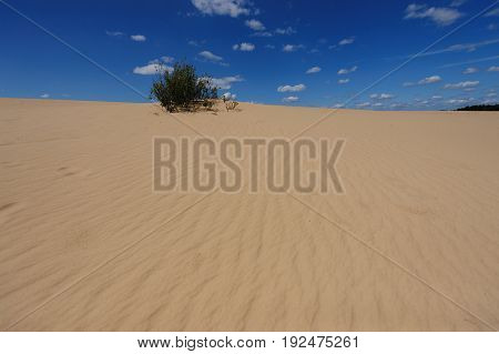 Sand Dunes in National Park De Hoge Veluwe, the Netherlands