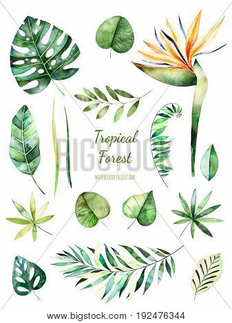 Handpainted watercolor floral elements. Watercolor leaves, branches, flower