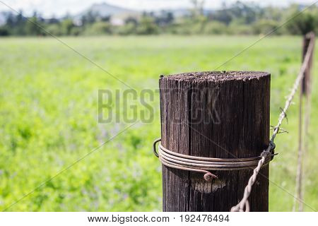 Weathered wooden fence post close up next to green meadow - conceptual background of loneliness and solitude with space for text