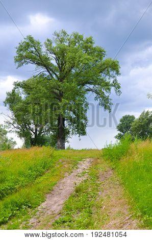 big tree village road to the sky