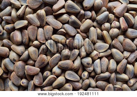 Giant Korean cedar nuts with shell texture to background