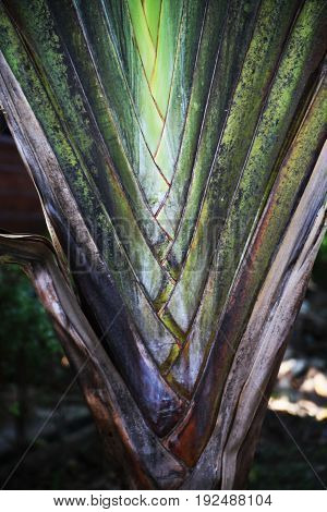 leaf of a palm tree with a geometrical portrayal of growth of greens