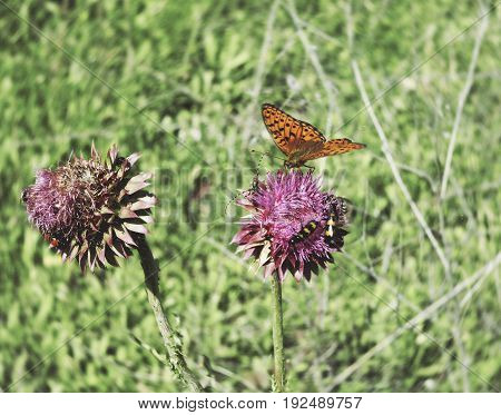Photo of flowers with colorful butterfly in the desert. Around the greens and the summer sun, the orange color of the wings butterflies and wild flowers